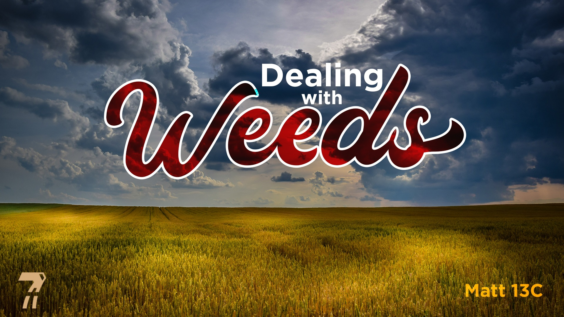 Matthew 13c – Dealing with Weeds